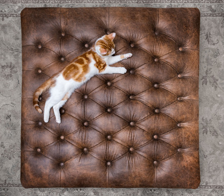 Looking down at cute red kitten sleeping on a luxurious buttoned leather ottoman Stock Photo - 98644690