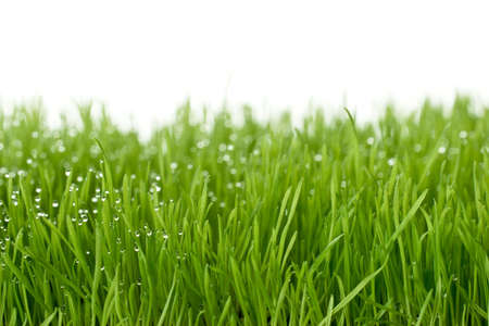 fresh green gras with focal point on the waterdrops Stock Photo
