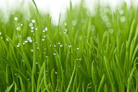 focal point: fresh green gras with focal point on the waterdrops Stock Photo