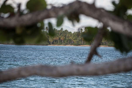 meer: Caribbean beach and blue sea with trees Stock Photo