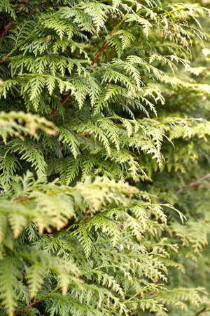 pflanzen: Plants