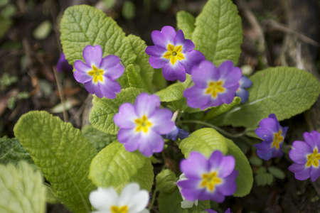 frhling: Flowers Stock Photo