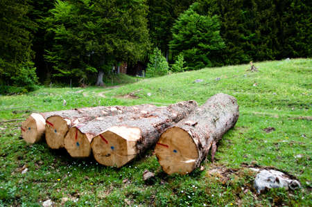Freshly cut tree logs Stock Photo - 9767563