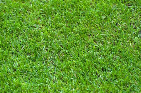 cut grass: Football Stadium Grass Stock Photo