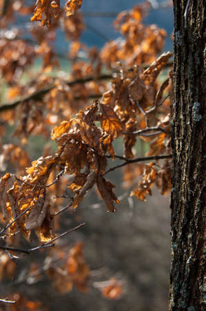 Autumn In Forest photo
