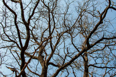 tree branches and sky photo