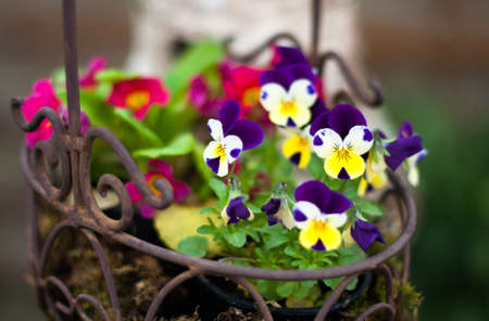 Spring flower basket photo