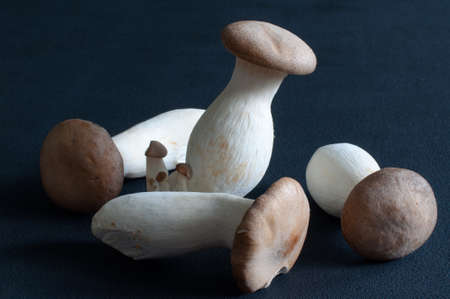 King Oyster mushrooms (King Trumpet  French horn  Pleurotus Eryngii  Eringi) on dark background Stock Photo