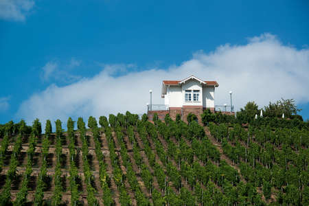 Villa in vineyards Stock Photo - 15138147