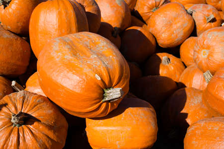 Heap of pumpkins photo
