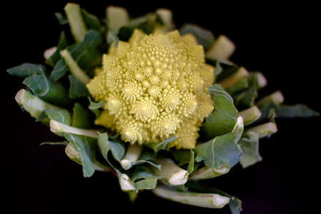 romanesco - italian broccoli  photo