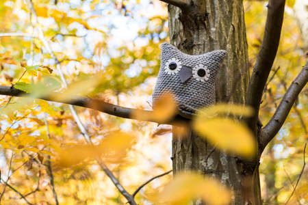 soft toy: Soft toy owl is placed in autumn forest