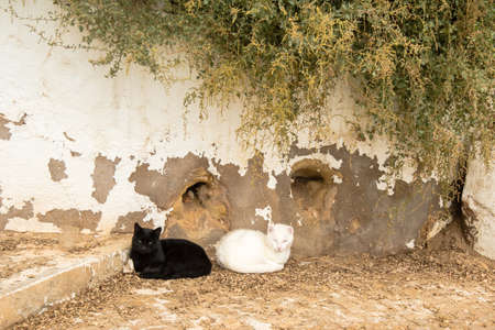 laying on back: Best friends: Two cats, one black and one white, laying back to back on the streets of Portugal in bright sun