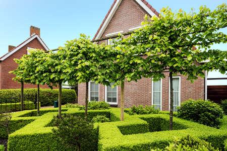 装飾的な緑ツゲ茂みやオランダの美しい家の前に木