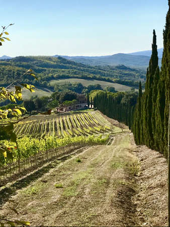 Typical landscape in Tuscany with cypress trees