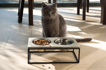 Beautiful cat sitting in front of a food bowl