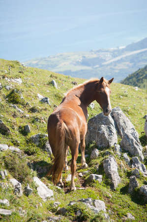 A brown horse on the top of the mountain with the sea and the sky behind  photo