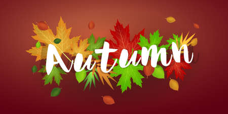 Autumn banner with leaves: Red background and autumn leaves. Vector image