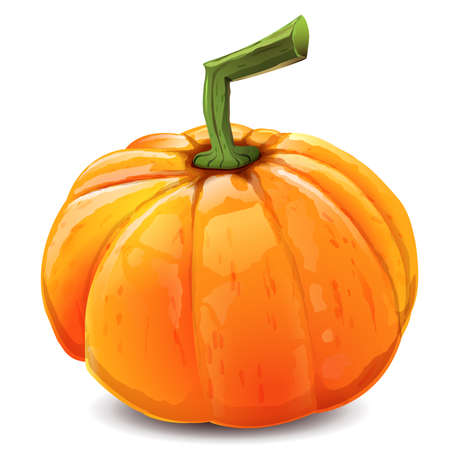 Orange autumn pumpkin: Isolated image with white background. Vector