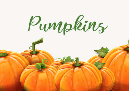 Background of orange autumn pumpkins - Pumpkins of different size on white background. Vector Çizim