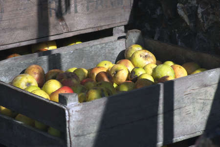 dappled: Crates of apples, in bright dappled sunlight with strong shadows, stacked against an old flint stone wall. Stock Photo