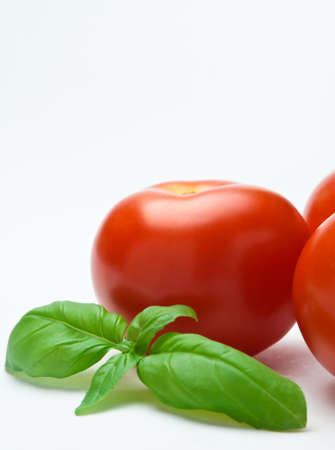 raminho: Close up of a sprig of basil nestled against a group of red tomatoes.  Only one tomato is entirely in frame.