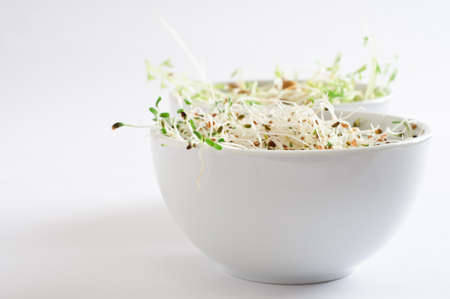 beansprouts: Two bowls of beansprouts.  Alfalfa in foreground, green lentil in background.  Copy space to left. Stock Photo