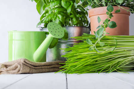 home grown: A selection of potted home grown culinary herbs on an old white painted wood table with watering can and hessian sack.  Representing kitchen scene or potting table. Stock Photo