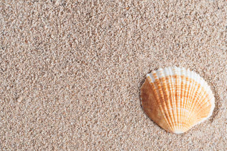 An orange and white fan shaped seashell, nestled into the lower right corner of grainy damp sand - which provides texture and copy space. Stock Photo - 17848421