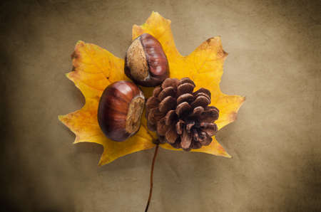 hues: A single Sycamore leaf in Autumn (Fall) hues on antiqued, vignetted paper with conkers and fir cone.