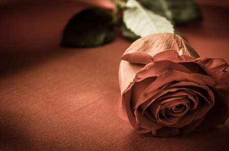 Valentines day or love concept.  A romantic red rose with leaves intact, lain on satin fabric with flower head  resting in foreground.  Vintage effect gives a coppery hue, with space on left side for copy.