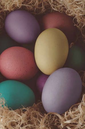 nested: Elevated view of painted Easter eggs in various hues, grouped and nested in dried grass.  Stock Photo