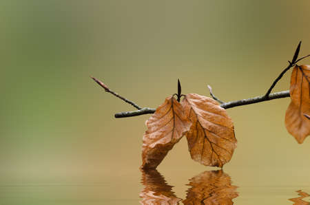 endings: A tree branch with Autumn leaves that touch and reflect in rippling water below.