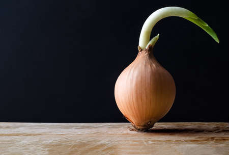 unstoppable: A raw, unpeeled sprouting onion, standing upright on a scratched wooden chopping board against a black chalkboard background.  Copy space to the left.