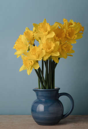 finishing touches: Bright yellow daffodils in blue enamel jug on wood table with blue background. Stock Photo
