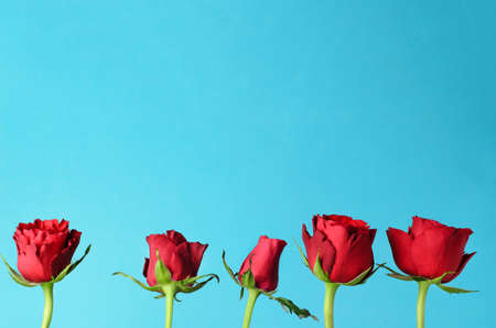 Five individual red roses, lined up in an upright row against a light, bright blue background.