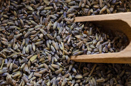 Close up of dried Lavender buds with wooden scoop.. Herbal background. Foto de archivo