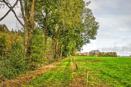 Grass path between a meadow and a small forest on the former island of Schokland in Noordoostpolder (North East Polder)