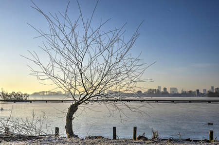 Pollard willow at the bank of frozen  lake Kralingse Plas in Rotterdam, The Netherlands with a wooden walkbridge and the city's skyline in the distance