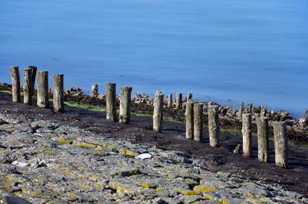 Row of weathered wooden poles on a dike on the coast of Oosterschelde estuary on the island of Noord-Beveland, The Netherlands, with layers of basalt, seaweed and tarmac Stockfoto