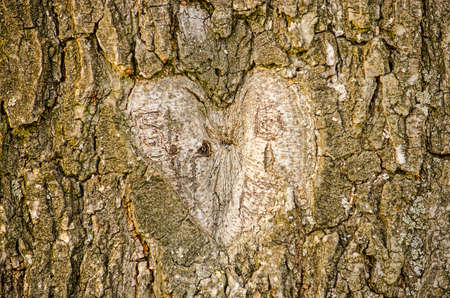 Shape of a heart carved out of the bark of an old tree Banco de Imagens