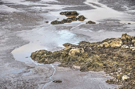 Section of a sandy beach with puddles, rocks and seaweed