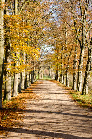 Dirt road lined with tall trees in autumn colors leading to an old fence near Valkenburg, The Netherlands