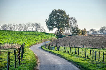 Hollow asphalt road in a hilly landscape with fields, meadows and scattered trees near Valkenburg, The Netherlands