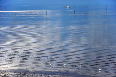 Minimalistic image of the shore of Oosterschelde estuary, the Netherlands with a few seagulls, a little boat and clouds reflecting in the smooth water surface