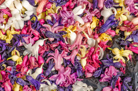 Top view of a box with hyacinth petals in many colors ranging from white and yellow to pink and purple Stockfoto