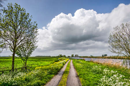 Narrow two track asphalt country road lined with rapeseed and cow parsley in the Alblasserwaard polder in the Netherlands in springtime