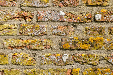 Close up of an old brick wall with lichen in various colors as well as other impurities almost entirely covering the original orange red of the masonry