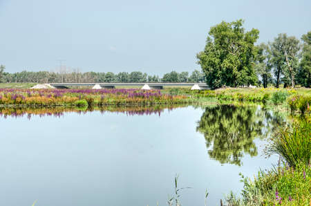 View across one of the creeks in the Noordwaard section of Biesbosch national park in the Netherlands towards fields of purple loosestrife and rumex, trees and a concrete bridge