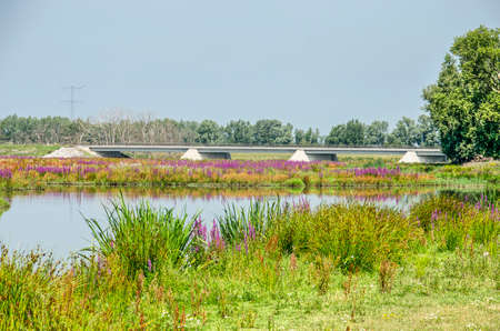 Landscape in the Noordwaard section of Biesbosch national park in the Netherlands with colorful wildflowers, a creek and a new concrete bridge under a blues sky on a summer day Banco de Imagens